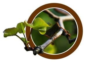 branch-circle